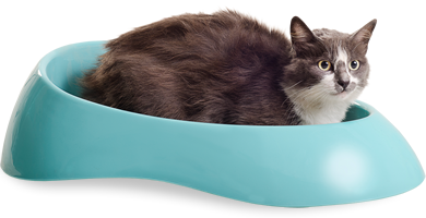 Banheiro do gato