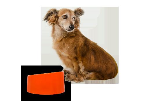 Potes para cães slim